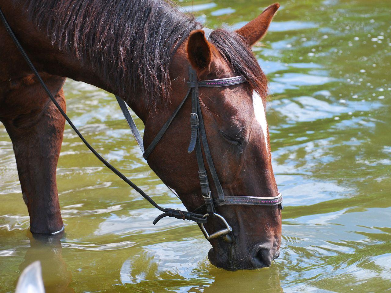 Летом башкиркам бывает достаточно один раз подойти к ручью, чтобы напиться