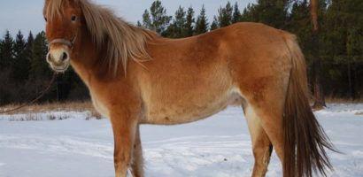 В Башкирии действует государственный племенной рассадник башкирских лошадей