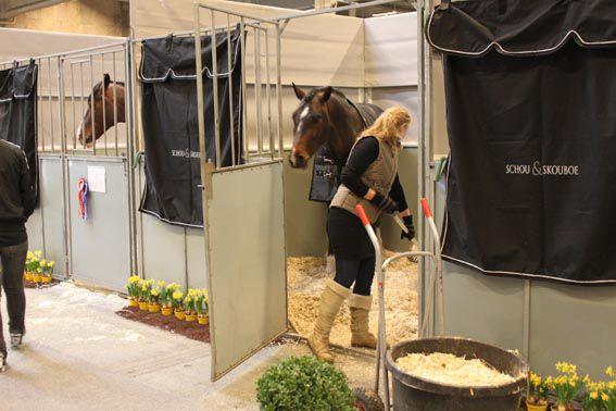 Чистка стойла играет большую роль в профилактике болезней лошади