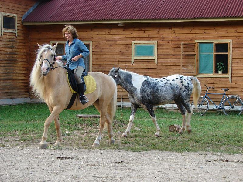 Для башкирской лошади характерен мягкий ход