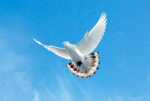 Лёт бакинского голубя