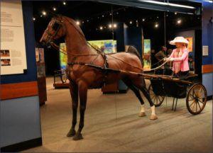 Музей Американской верховой породы лошадей