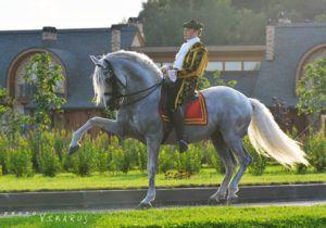 Частная прогулочная езда