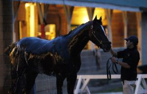 Мытьё лошади