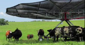 Специальный навес, защита коров от солнца