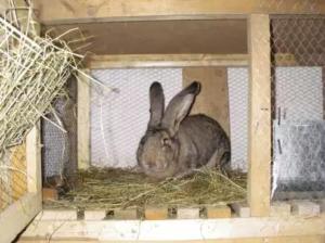 Благоприятная обстановка для кролика