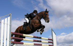 Забеги в спортивно-конных клубах