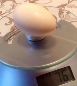 Куры породы барвиста несут качественные яйца
