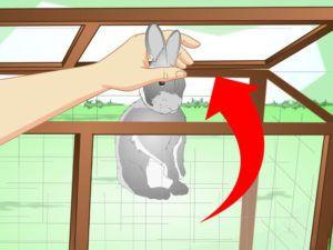 Пересадите больных кроликов в другую клетку