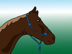 Привяжите лошадь