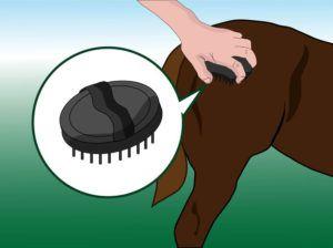 Удалите грязь и пыль с тела лошади резиновым скребком