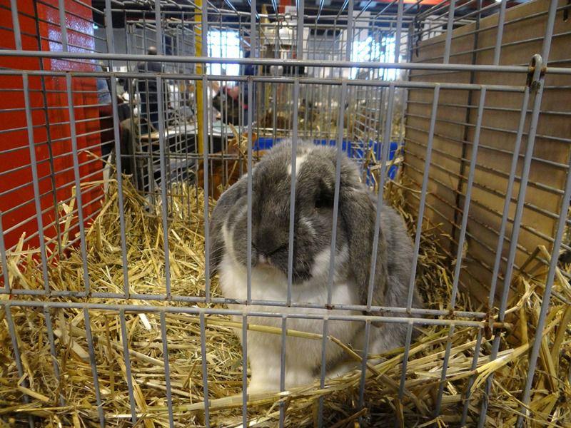 Зараженных кроликов необходимо отсадить