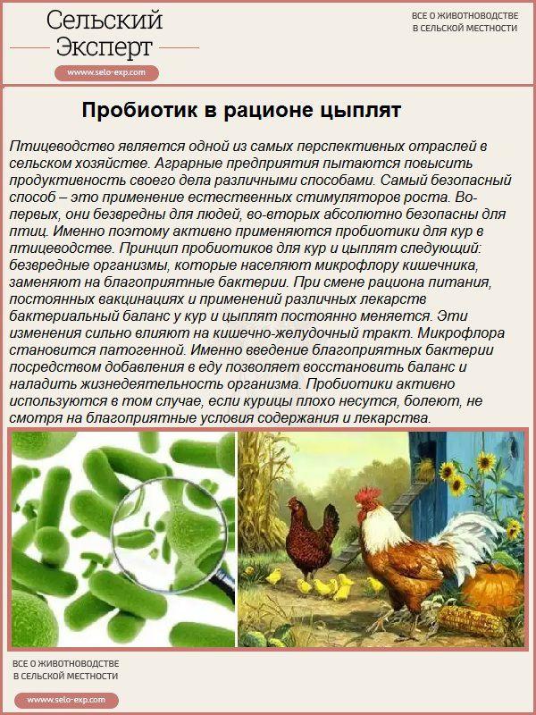 Пробиотик в рационе цыплят