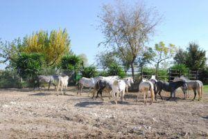 Условия содержания лошадей