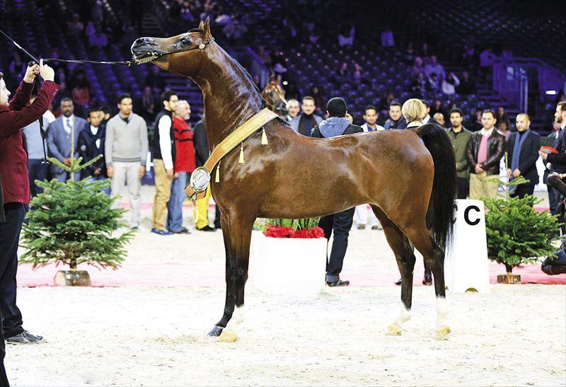 Арабские лошади-чемпионы оцениваются в 1 млн долларов
