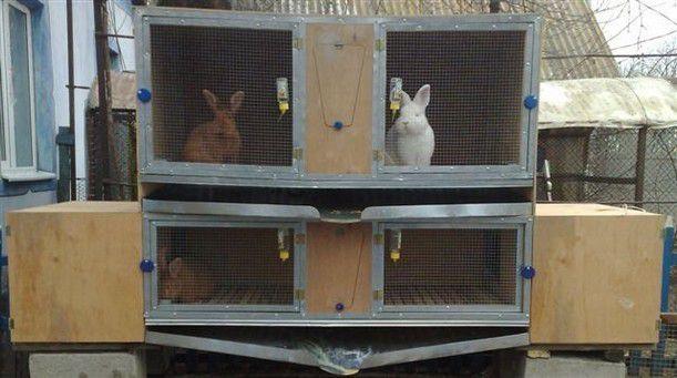 Беременную крольчиху отсаживают от самца, но недалеко, чтобы животные могли общаться