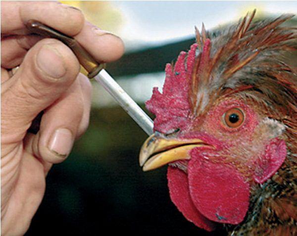 Вакцинация индивидуальным закапыванием