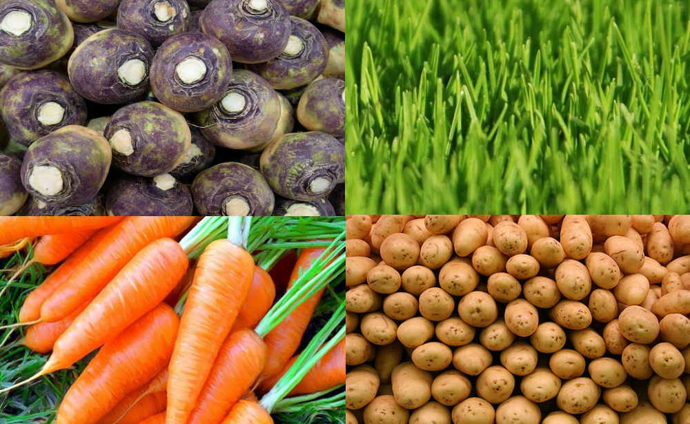 Варианты сочных кормов