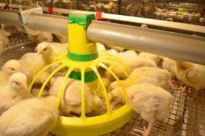 Вариант кормушки-непросыпайки для цыплят