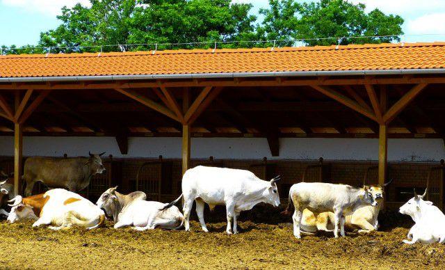 Весной и летом пик заболеваемости у скота