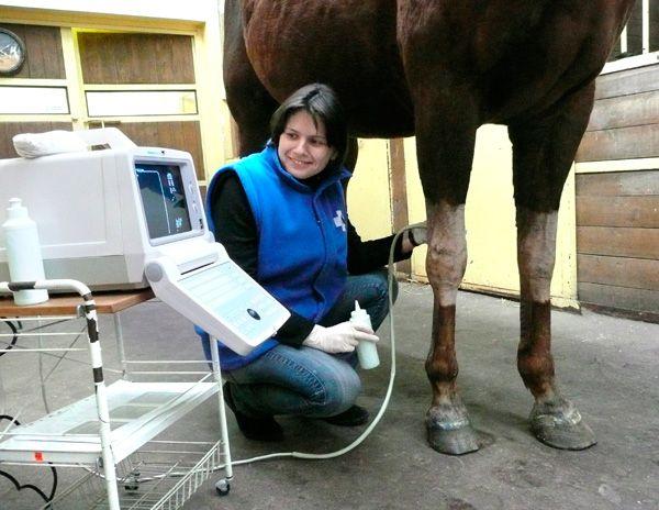 Ветеринария. Осмотр лошади ветеринаром