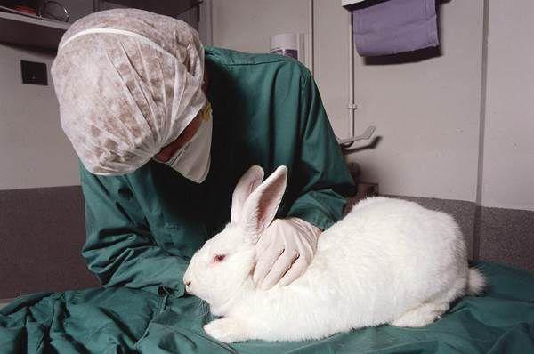 Ветеринар назначит больному кролику действенное лечение