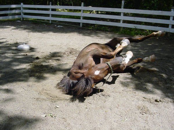 Во избежании травмирования лошадей нужно проверять загон на наличие посторонних предметов