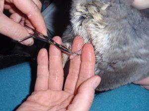 Вырезание волосяного кольца