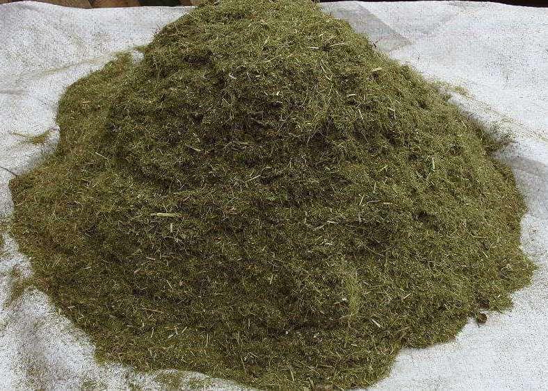 В зимнее время зелень смогут заменить хвойная и травяная мука