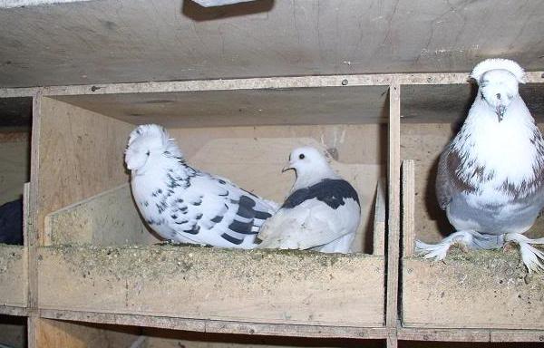 Как сделать гнёзда голубям 25