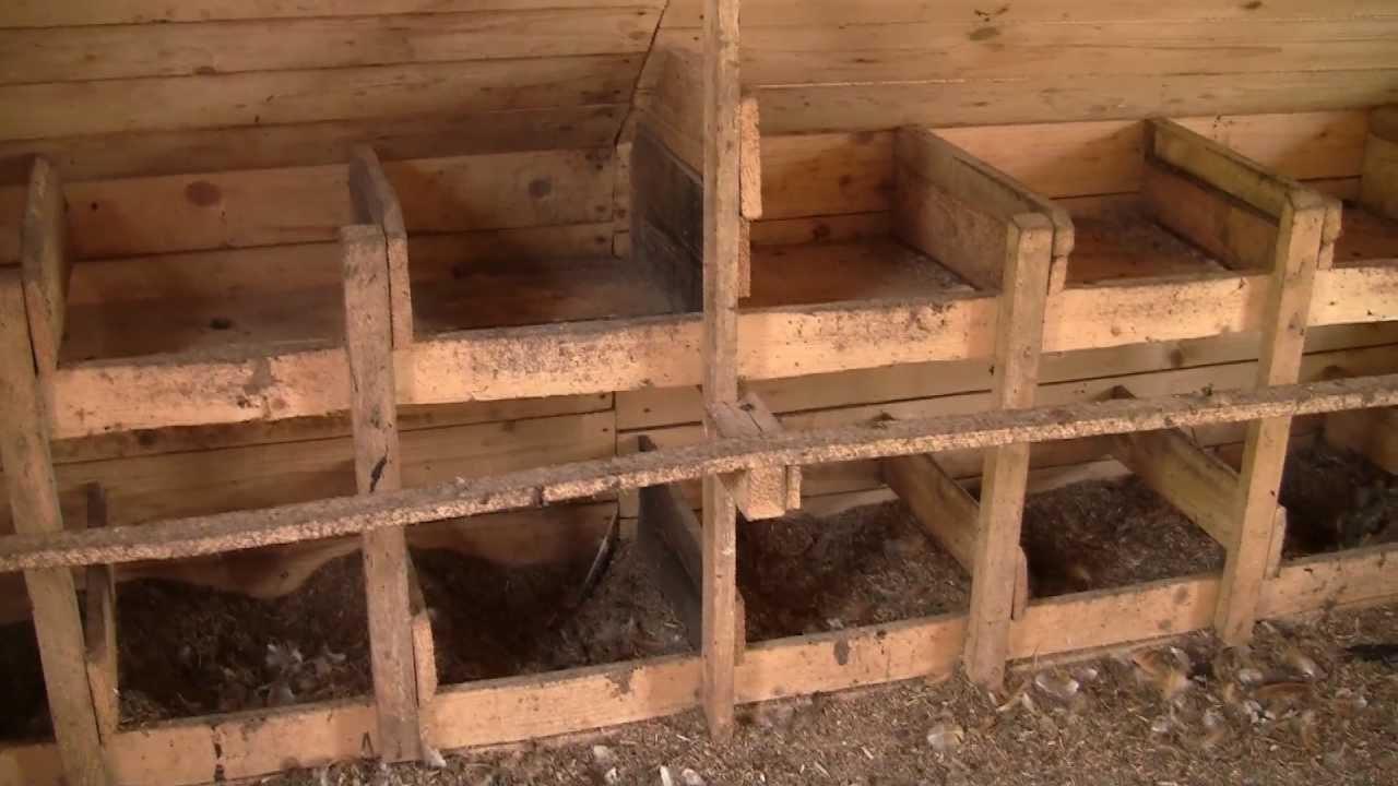 Гнезда обычно делают из деревянных ящичков