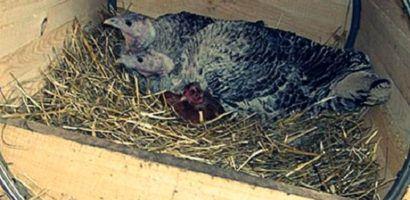 Гнездо в форме бочки