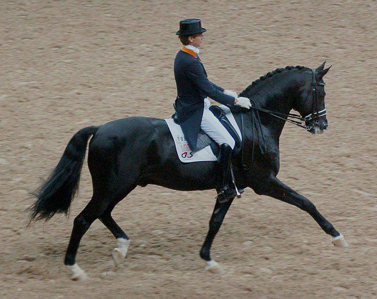Голландская теплокровная лошадь на соревнованиях по выездке