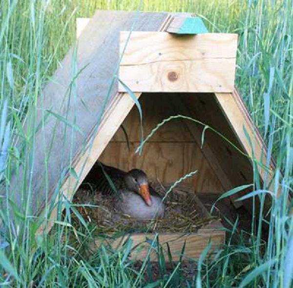 Сверху входа набита планка которая затемняет гнездо