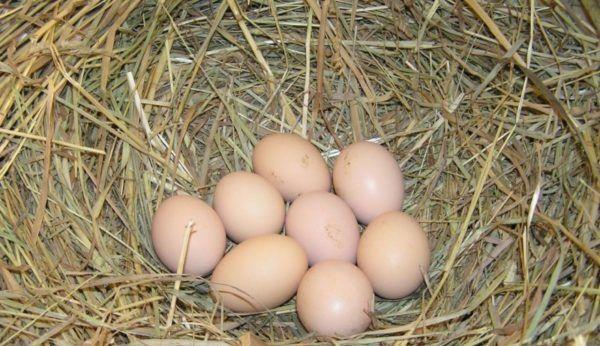 Домашнее яйцо всегда вкуснее фабричного