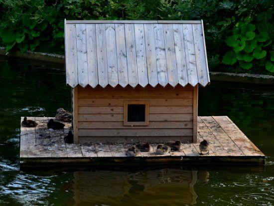 Домик для уток на воде