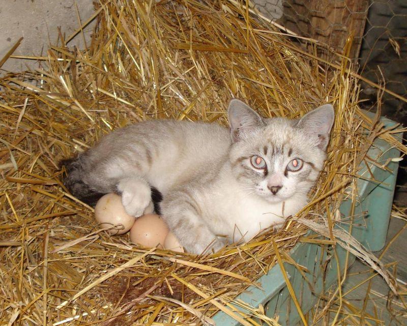 """Если курица ушла, нужно закрыть гнездо, иначе там может появиться другая """"наседка"""""""