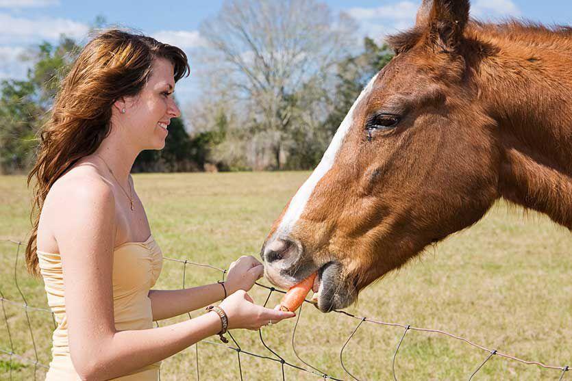 Желудок лошадей должен в течении всего дня находится в работе