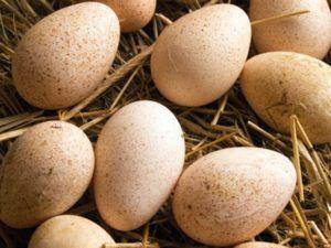 За раз в кладке может быть до 5 яиц