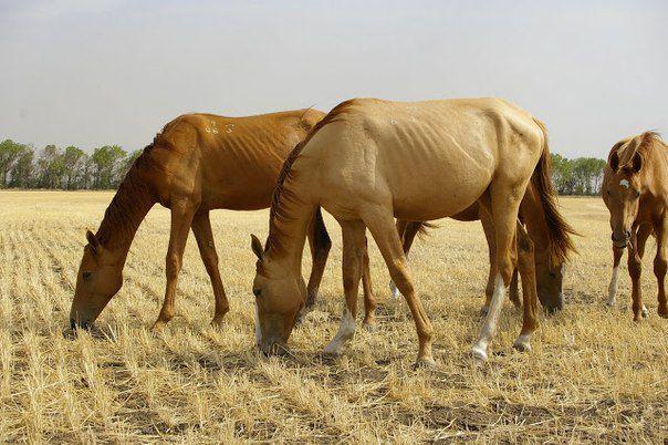 Здоровье лошади зависит от ее рациона
