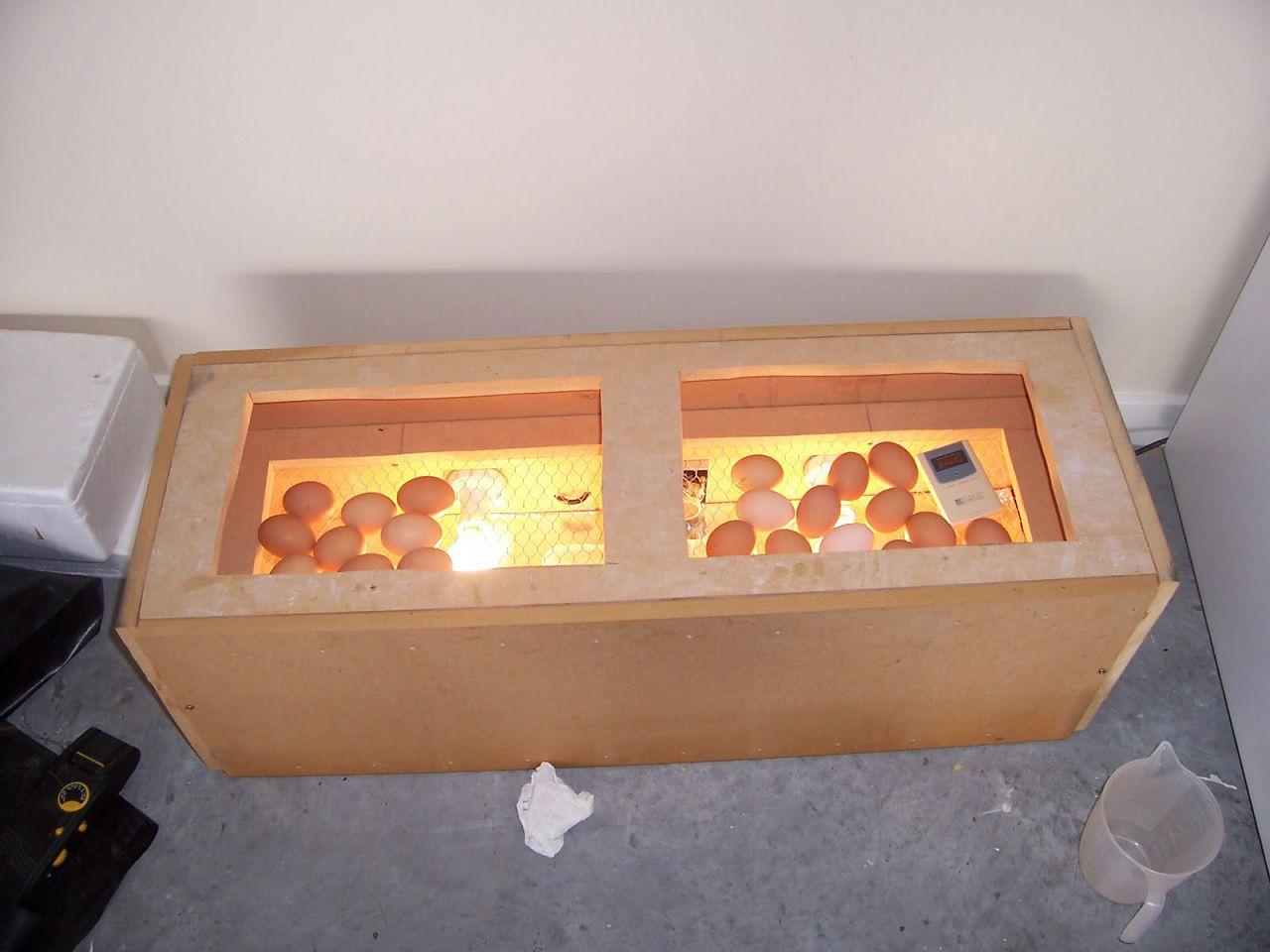 Прогревание в инкубаторе при помощи ламп накаливания