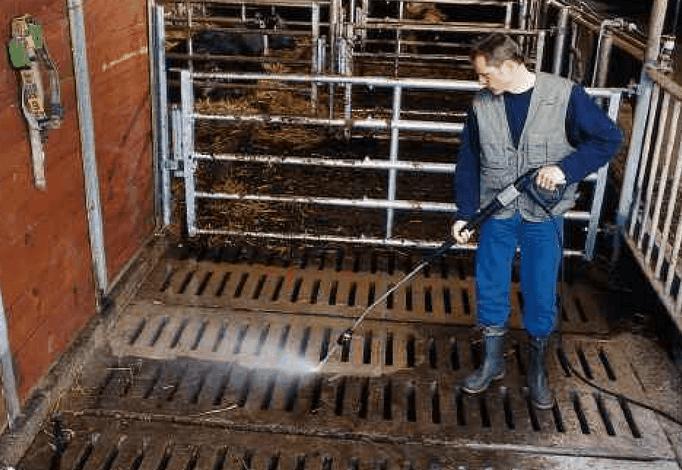 Использование подстилки с бактерии позволит снизить частоту уборки в свинарнике