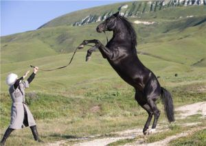Кабардинская лошадь традиционно находится на свободном содержании на пастбище