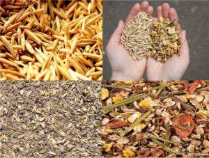 Кабардинцам в засуху и зимой дают смесь сена, овса и ячменя, добавляя компоненты, увеличивающие энергетическую ценность корма