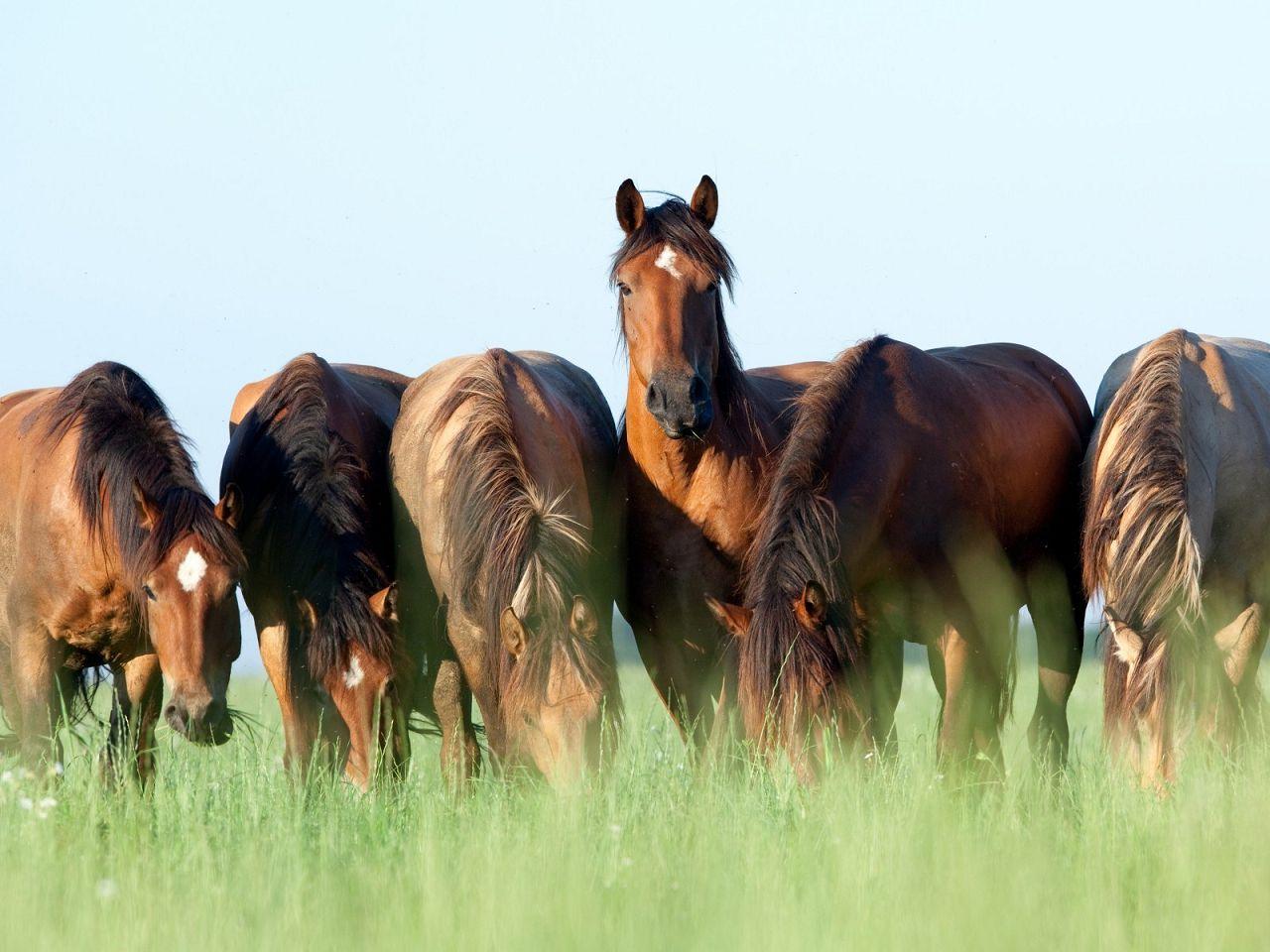 Каждой лошади необходим индивидуальный подход в питании