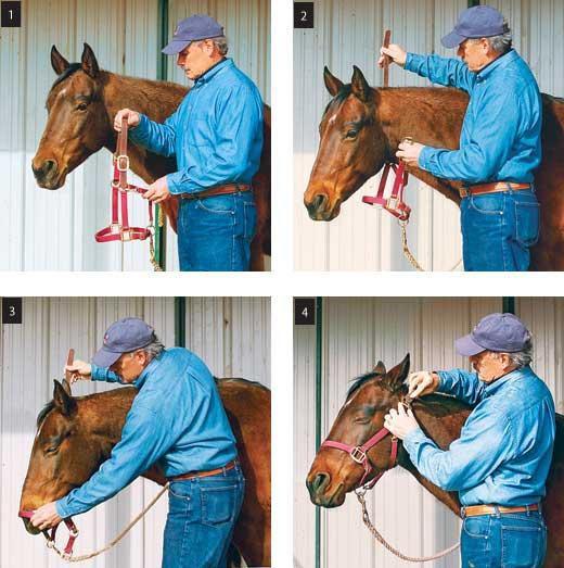 Как надеть уздечку на лошадь