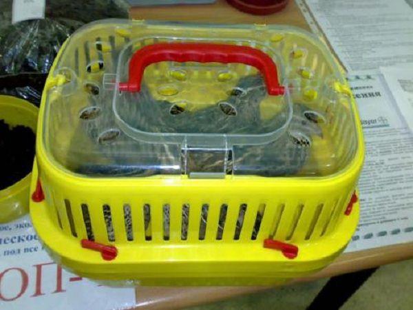 Компактная пластиковая переноска