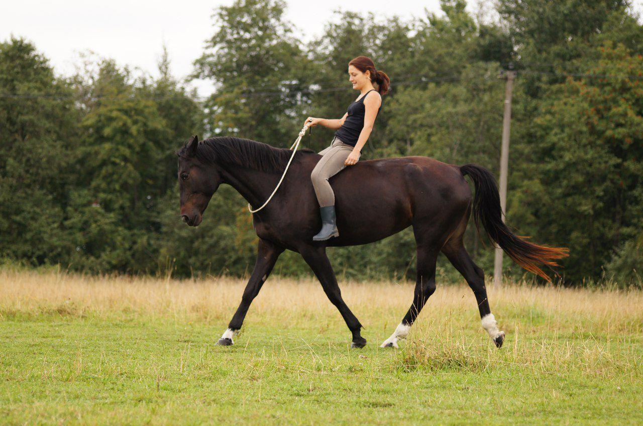 Уздечка для лошади своими руками фото 923
