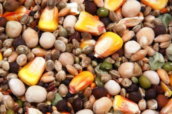 Кормовая зерновая смесь