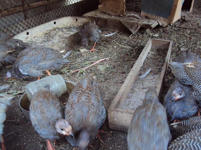 Кормушки и поилки для птиц рекомендуется выбирать продолговатой формы